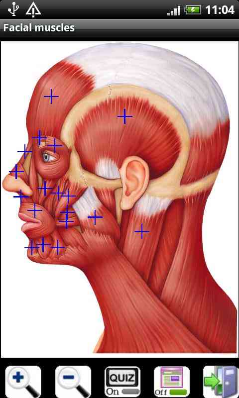 http://androidina.net/wp-content/uploads/Visual-Anatomy-Full_.jpg